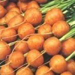 Zanahoria tipo redonda